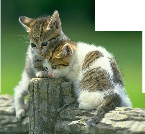 gifs chats